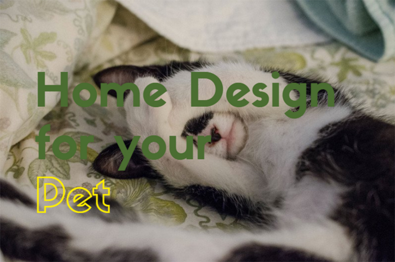 Home Design For Your Pet