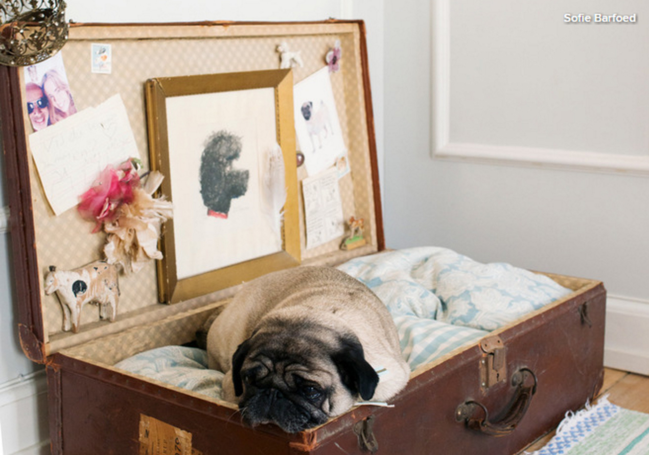 Home Design For Your Pet Dog