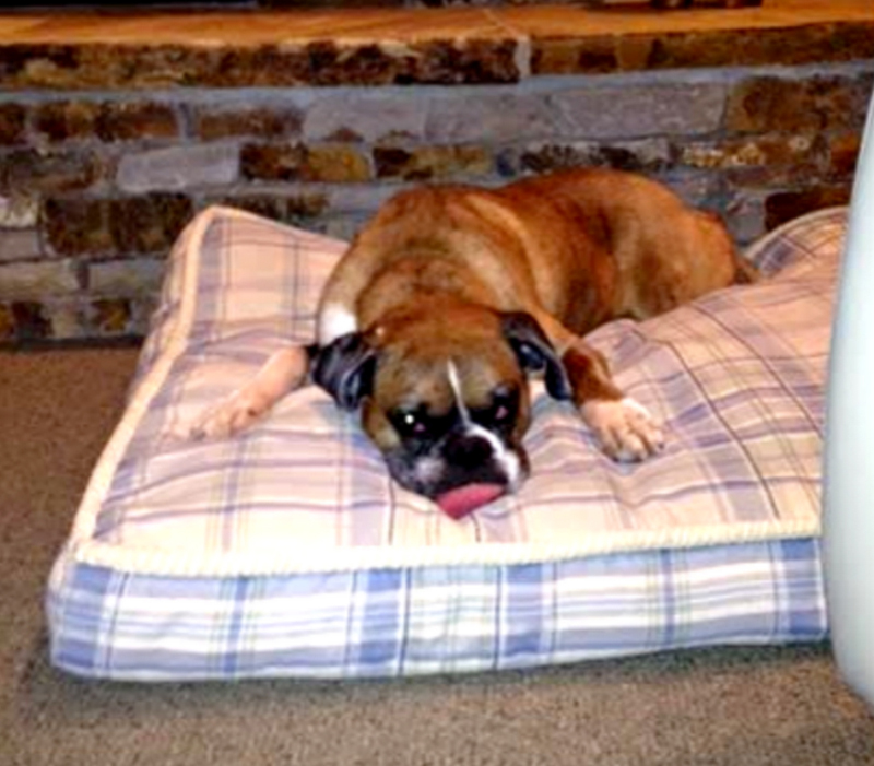 Home Design For Your Pet in Bend